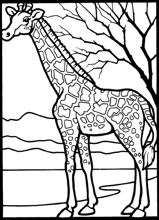 Baby Giraffe Coloring Sheets