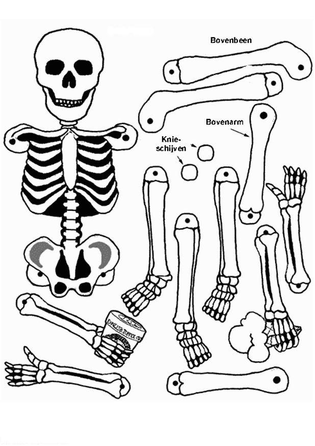 human body crafts for kids - kidscrafts, Skeleton