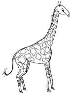 Kids n fun.de   Malvorlage Giraffe Giraffe