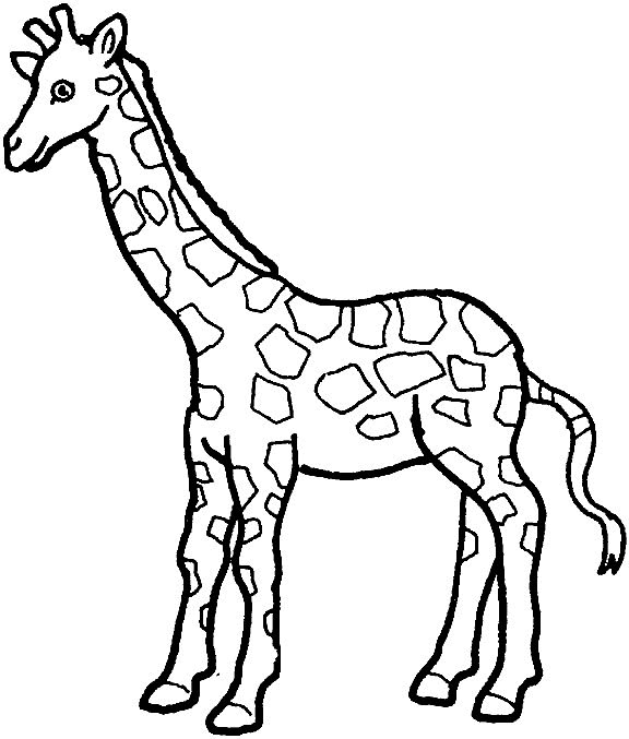 Kids-n-fun Malvorlage Giraffe Giraffe