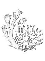 Kids n fun.de   Malvorlage Koralle Koralle 3