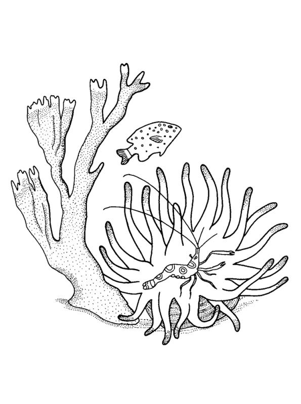 Kids-n-fun Malvorlage Koralle Koralle 3