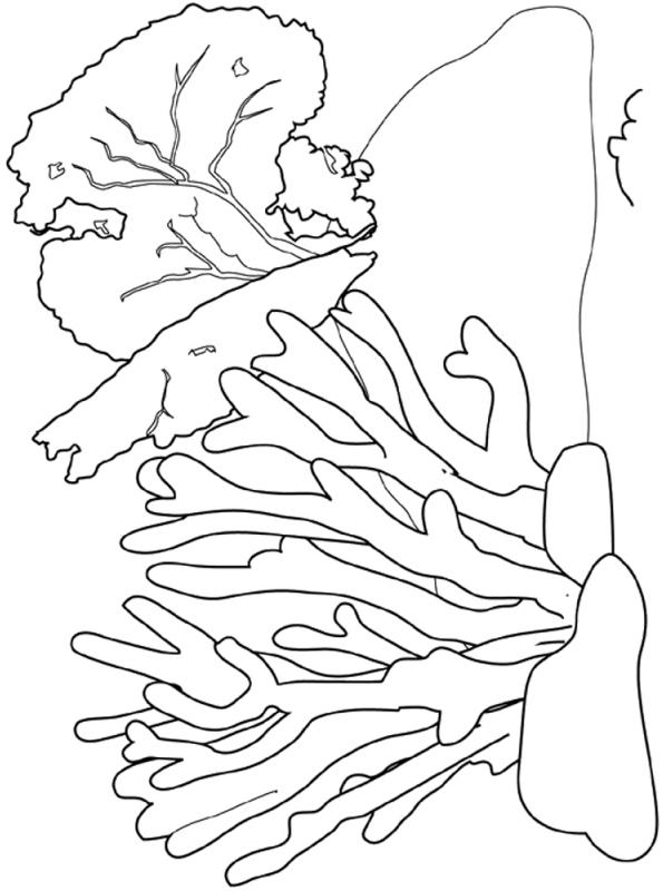 Kids-n-fun Malvorlage Koralle Korallenriff 2