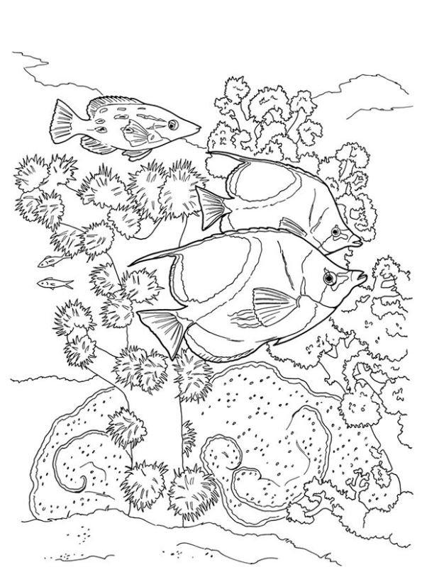 Kids-n-fun Malvorlage Koralle Korallenrifffische