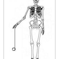 32 Körperumriss Mensch Ausmalbild   Besten Bilder von ...