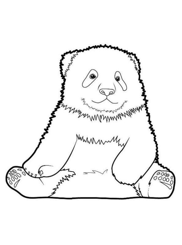 Kids-n-fun Malvorlage Panda Panda