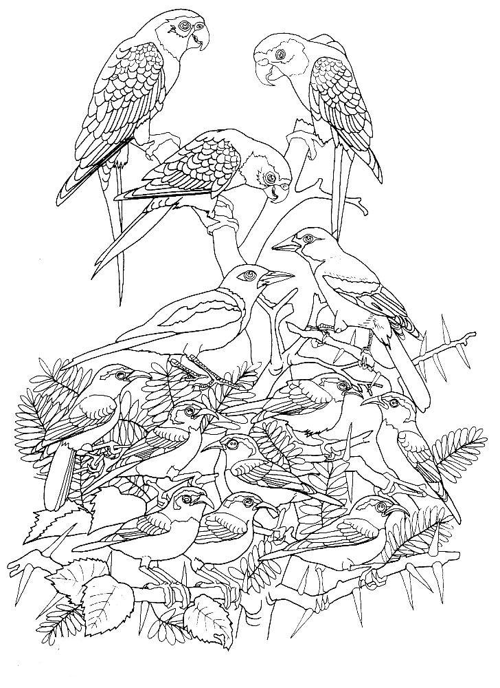 Kids-n-fun Malvorlage Vogel Vogel