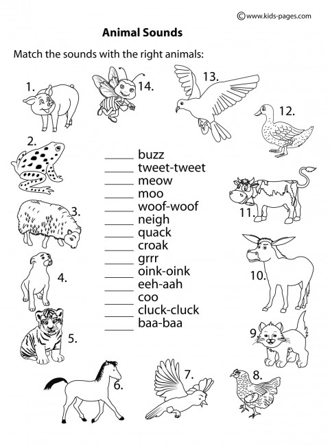 Animal Sounds BampW Worksheet