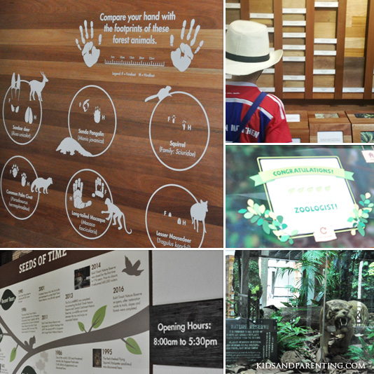 bukit-timah-reserve-visitor-center-exhibits