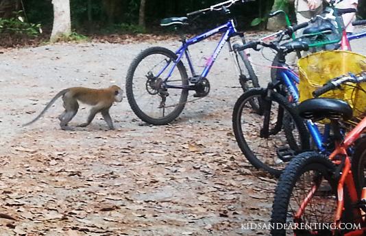 ubin-monkeys