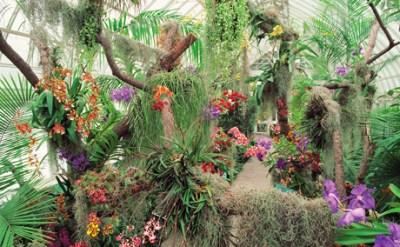Orchid_ShowV2_New_York_Botanical_Garden_NYBG_460x285