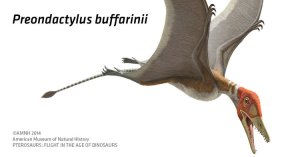 The Preondactylus is one species of pterosaurus sweeping into the Carnegie.