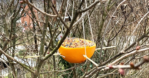 Maker Monday: Orange Peel Birdfeeder