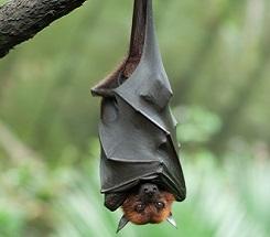 Natures Spooks Part 2 Bats  Kids Discover