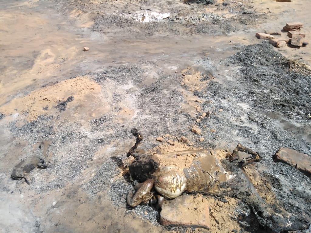 Animals dead in Um Hagalig.