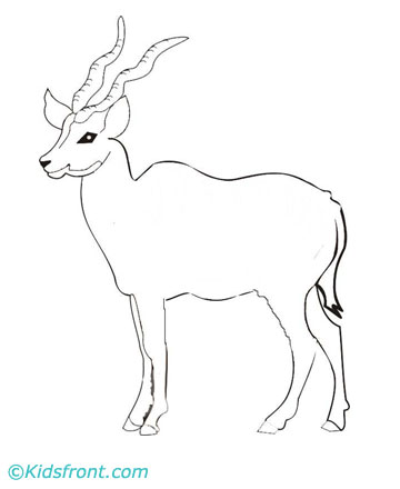 Antelope Coloring Pages Printable
