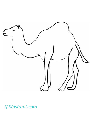 Camel Coloring Pages Printable