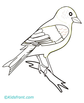 Drawings Of Finches