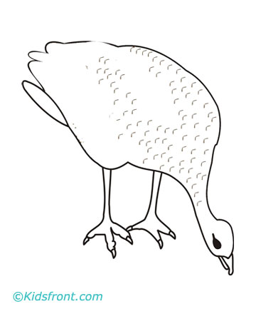 grouse coloring page drawing fill colors to print grouse