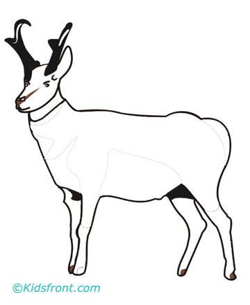 Pronghorn Coloring Pages Printable