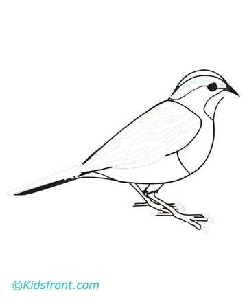 Sparrow Coloring Pages Printable