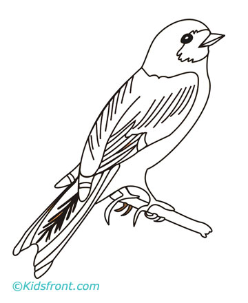 Wren Coloring Pages Printable