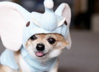 25 Adorable Pet Costumes - Kids Kubby