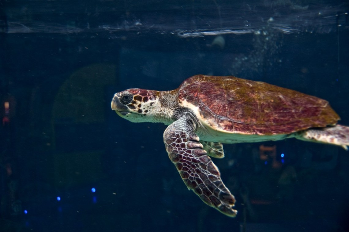 cretaquarium turtle in tank