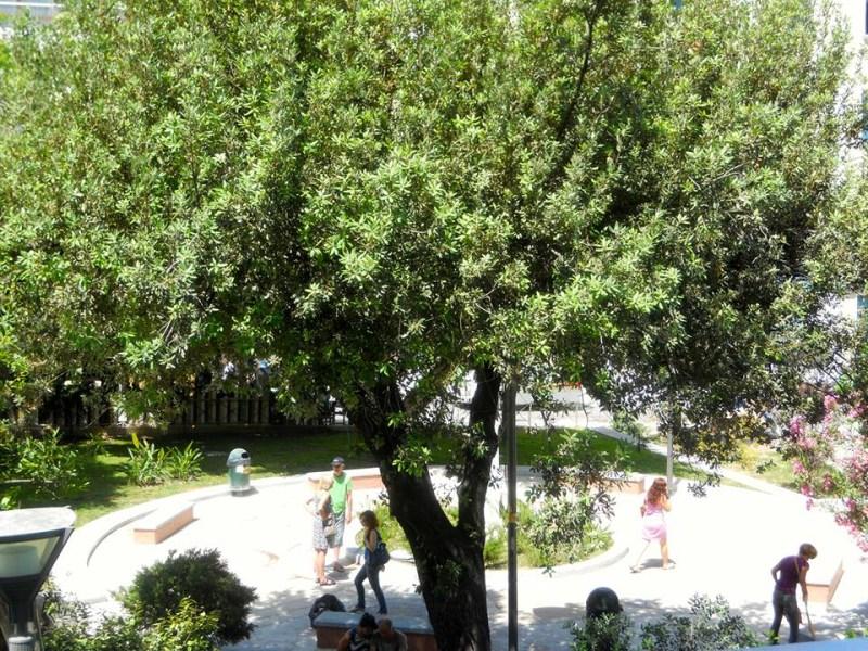 Playground at Georgiadis park