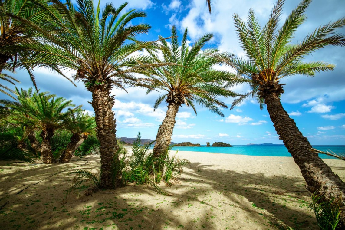 Vai natural palm trees forest Lassithi Crete