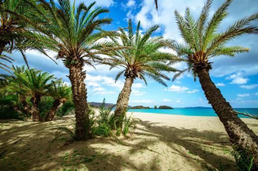 Vai natural palm trees forest Lassithi Crete