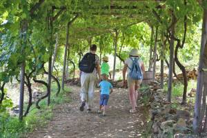 Botanical park family walk