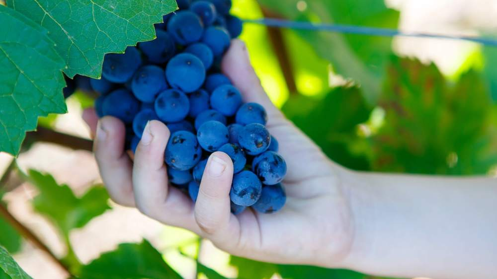 Wine Making and Cooking Family Experience Crete