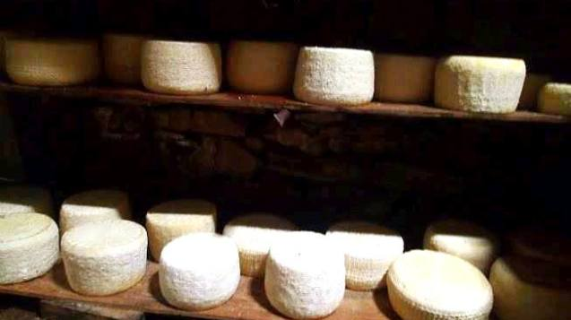 Traditional Cretan Cheese Tasting and Making