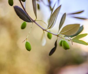 Family Visit to a Traditional Olive Oil Farm in Crete