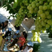 Wine Making and Cooking Lesson Family Experience in Crete