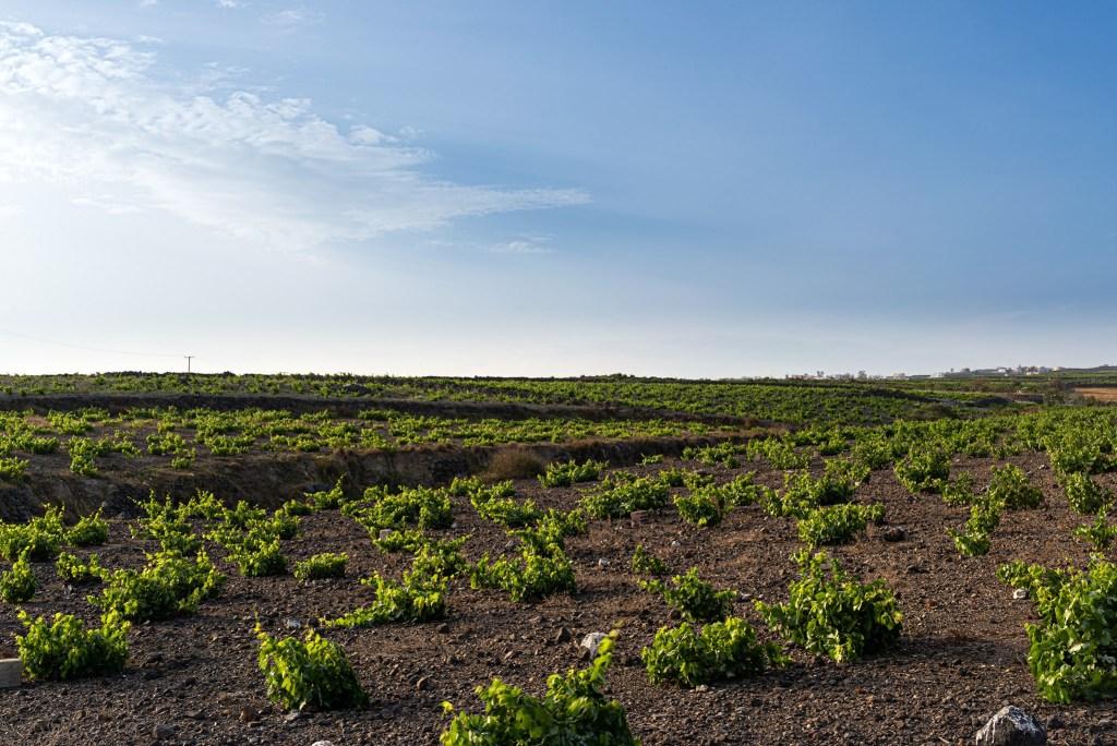 Gavalas Winery Facebook
