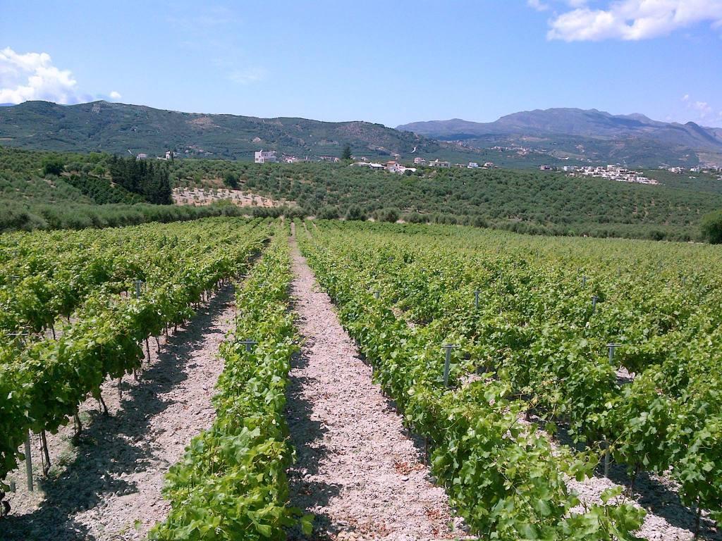 Karavitakis winery Facebook