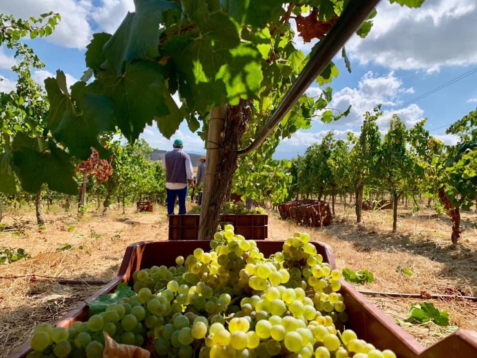 Paternianakis Winery Crete Greece
