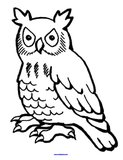 Owls Theme theme activities and printables for preschool