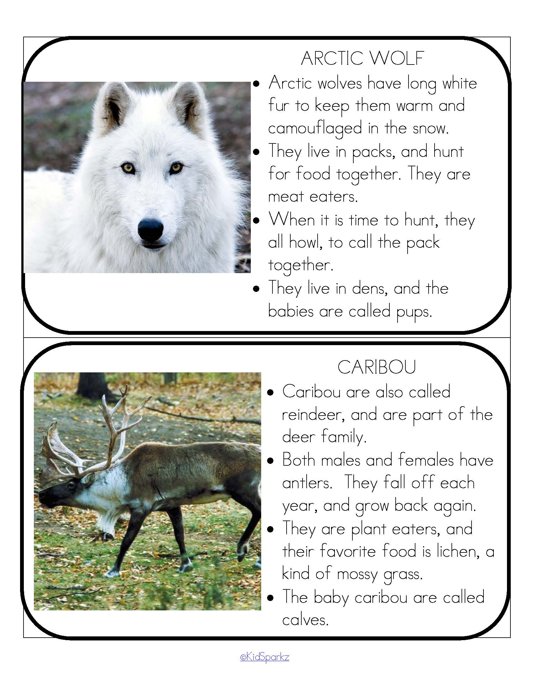 Arctic Animals Pack