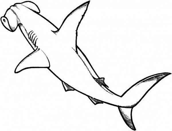 A Drawing of Hammerhead Shark from the Top Coloring Page