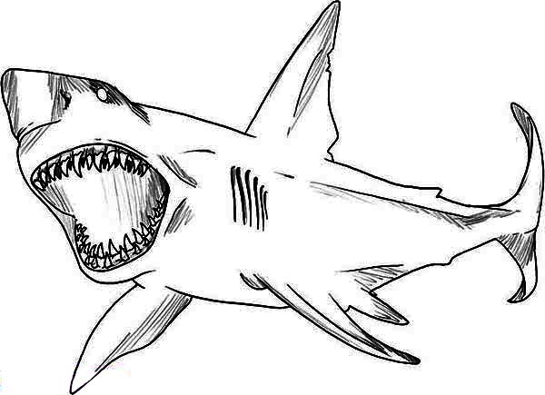 a sketch drawing of great white shark coloring page  kids