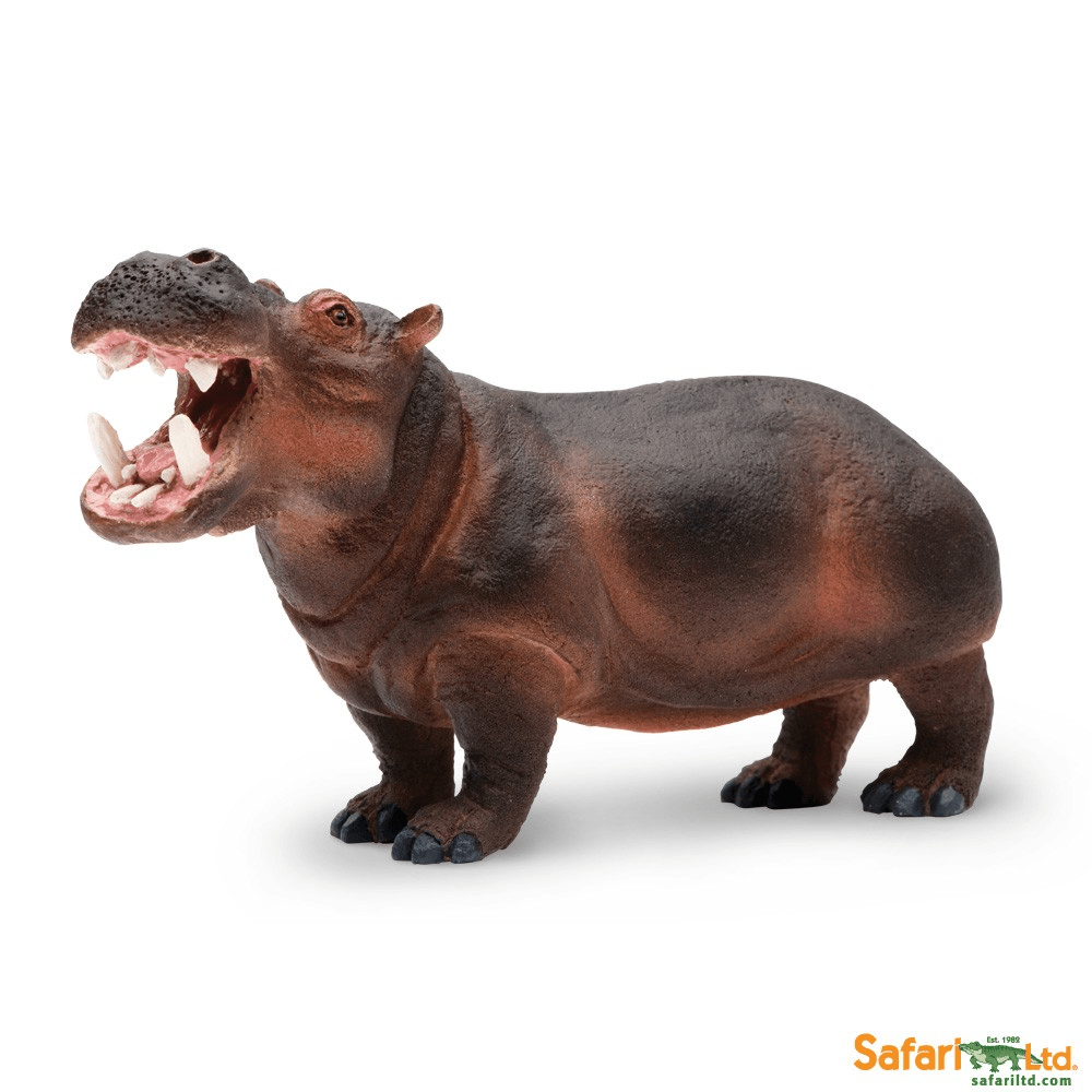 Hippopotamus Pictures Kids Search