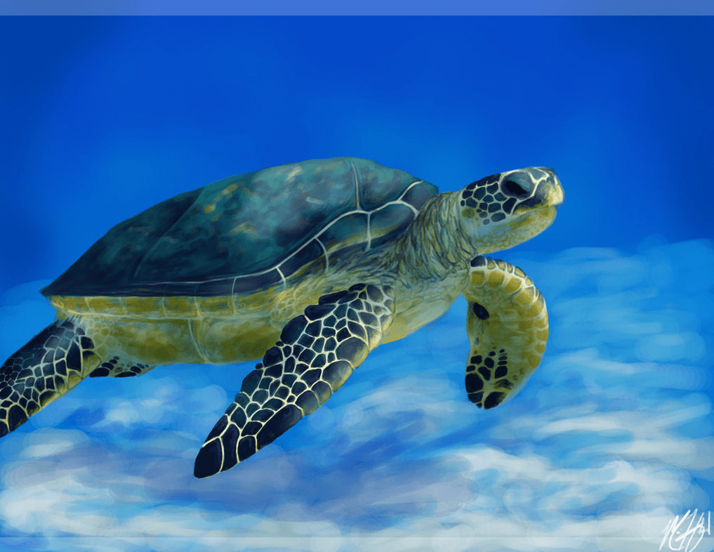 Turtle Pictures  Kids Search