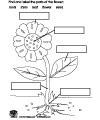 Flower preschool and kindergarten activities and crafts