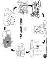 Weather preschool and kindergarten activities