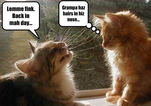 Animated Thanksgiving Wallpaper Funny Animal Talk Funny Photo