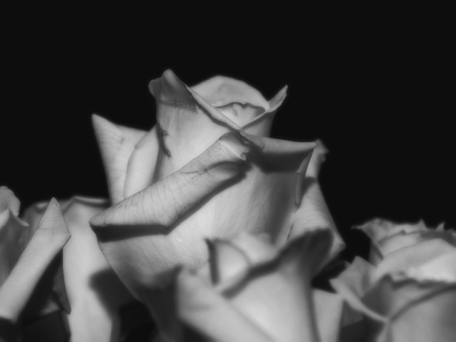 flowercolse