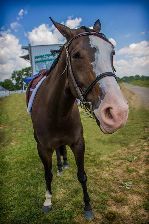 horsenose22